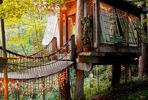 Dream garden ideas