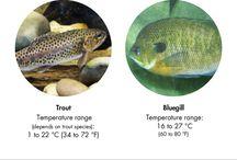 Fish Breeding