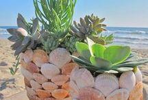 Conchas do mar