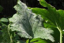 növények szaporítása,gondozása