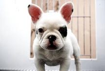 Puppy / by Iaia Guardo