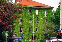 Växter på fasad