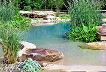 Natural pool - biotop