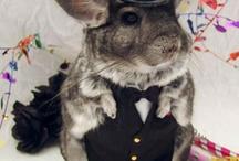 Costumes for Albert