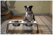 Gamelle double pour chien by MiaCara