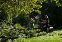 Tree Work in Danbury CT