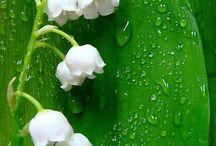 Gardening/ flowers