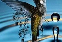 Hummingbirds  / by Derek Haley