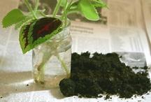 grün & nachhaltig