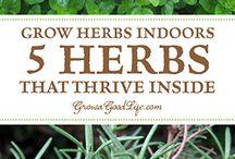 Herbs, veggies & fruit