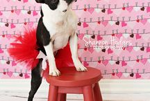 Be My Valentine / Love is in the air...don't forget your four-legged loved ones when celebrating Valentines Day!