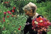 Tasha Tudor (28/08/1915 _ 18/06/2008) WonDerFull Women ~*~