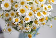 Spring ☀️
