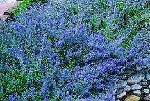 A Perennial Garden