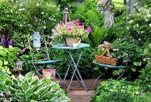 One day.. Garden