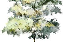 деревья акварель