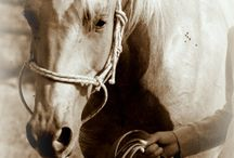Konie z SABATÓWKI