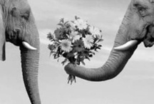 elephants / All about elephants, baby!