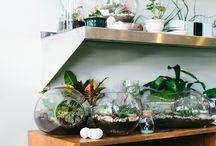 Terrarium Planters