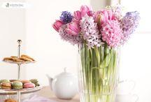 Pastel Hyacint Inpiration