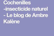 cochenilles