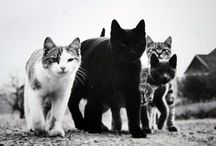 The mob cats