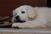 Bella / My lovely dog