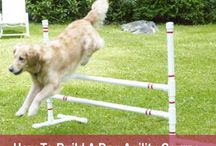 Agility / ideas for Meg and Ella and Libby!! / by Melissa Hubert
