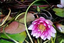 flower / flower