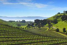Breathtaking Vineyards