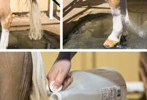 Horse cleaning