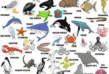 English: Voca Animals