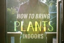 Plants and garden how to