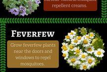 Rośliny na komary