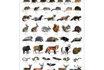 local wildlife study