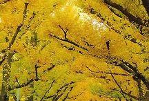 Yellow | Sunny