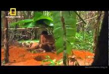 AMAZÔNIA / Tudo sobre a floresta amazônica brasileira