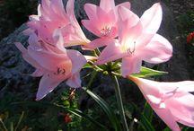 Giardini e fiori