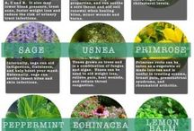 medicinal plants / by Pat Bishop