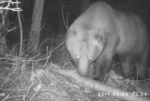 the RMKK people's Trail Cam / Wildlife that passes through our yard.