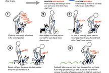 Animal Behavior and Training