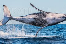 Marine Life Photography / All the amazing animals in our water world
