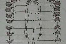 mujer.luna.ciclos