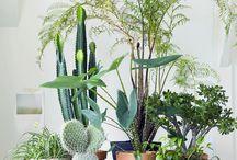 Nature Indoor