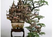 Bonsai / Interesting little trees