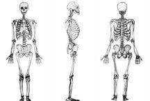 MAMUT despojado. / MAMUT se despoja, carece de excesos. transita en el mundo con lo necesario, lo esencial: el esqueleto, la estructura, el cuerpo que se transporta sobre MAMUT.  el mundo básico, donde la forma y las partes son lo importante. el lado arquitectónico, estructural, lineal de la naturaleza.  los huesos, isquio, hamate, sacro, ulna, dan solidez y sostienen esta estructura.  bienvenidos a un verano esencial. un verano MAMUT.