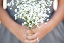 Flowers Flowers Flowers / by Kathy Beckman