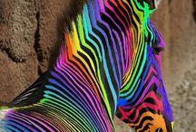 colors :X