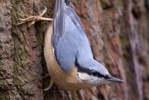 South Lodge birds