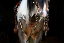 horses 9 / by Kelly Hauck